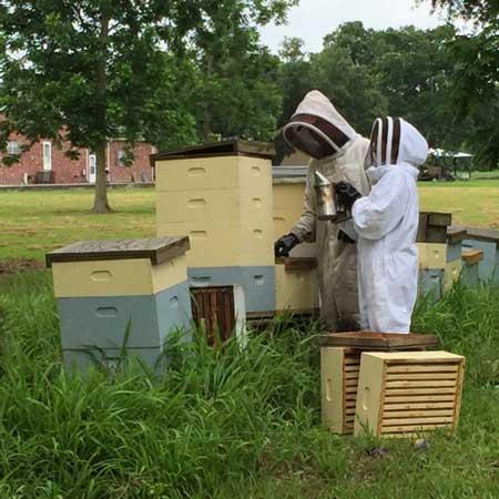 Dina Crochet beekeeping