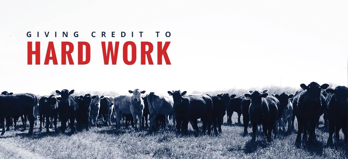 Cattle loans promo