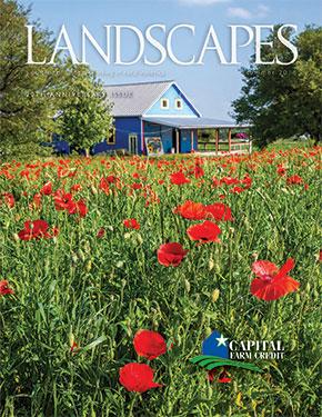 Landscapes Summer 2018